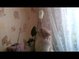 Мой кот обожает розы!